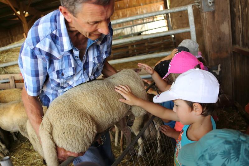 Moutons en Creuse, Limousin, Lac de Vasivière