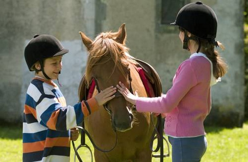 chevaux nature randonnées